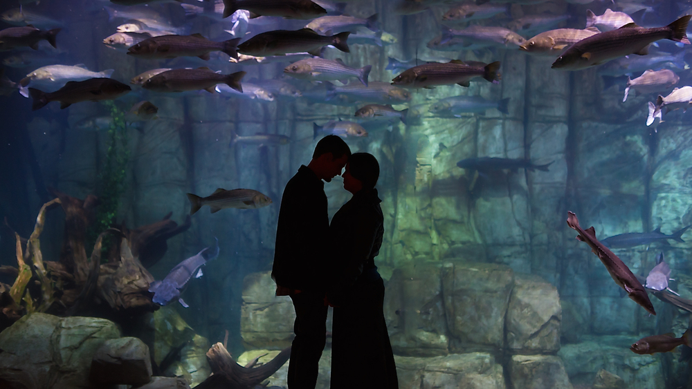 A beautiful silhouette pose during an underwater, ocean-themed, aquarium engagement photoshoot // Photos by Maddie Mae Photography