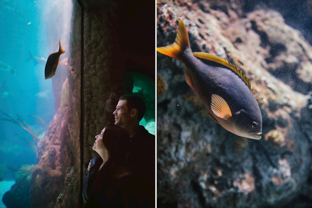 Stunning underwater aquarium engagement photoshoot // Ocean-themed engagement photos by Maddie Mae Photography