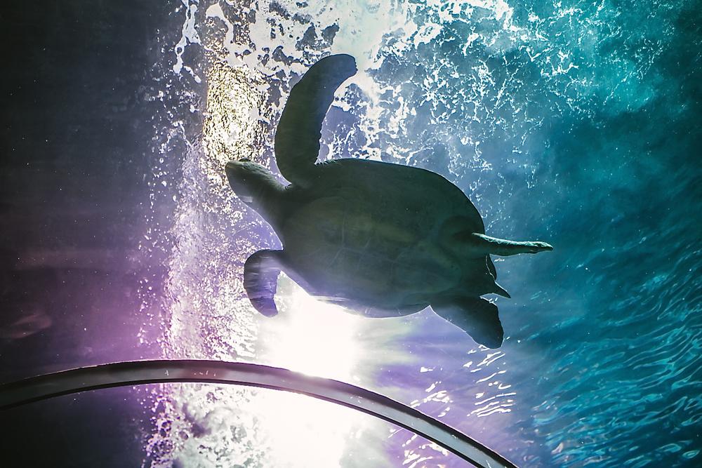 Sea Turtle desktop Background // Maddie mae Photography
