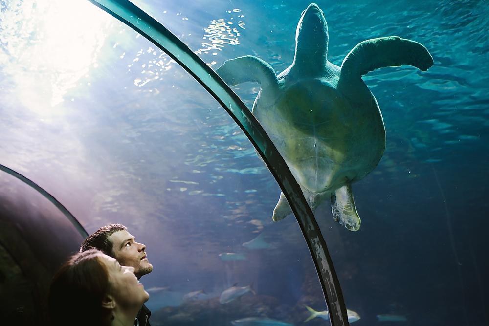 Downtown Denver Aquarium Engagement Photoshoot // Underwater, Ocean-themed, Fish, Sea Turtle Engagement // Denver Engagement Photographer // Maddie Mae Photography