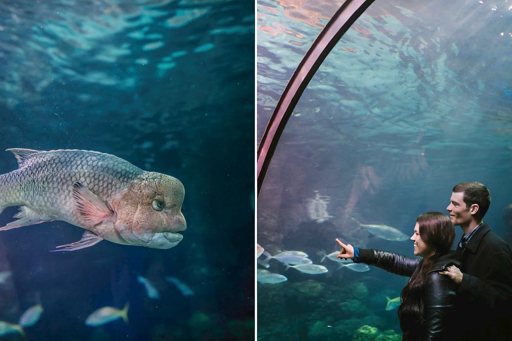 Kara Greg Aquarium Engagement Photoshoot Denver