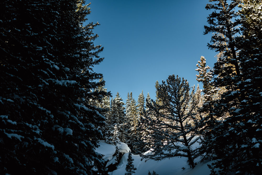 These trees around Lost Lake are so beautiful when they have snow covering them! I love winter mountain scenery, especially for an intimate snowshoeing engagement session! | Lost Lake engagement photos by adventurous Colorado wedding photographer, Maddie Mae.