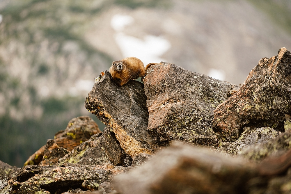 I love all the little critters that came out on Jessica and Edward's wedding day in RMNP! | Mountain elopement photos by adventure wedding photographer, Maddie Mae.