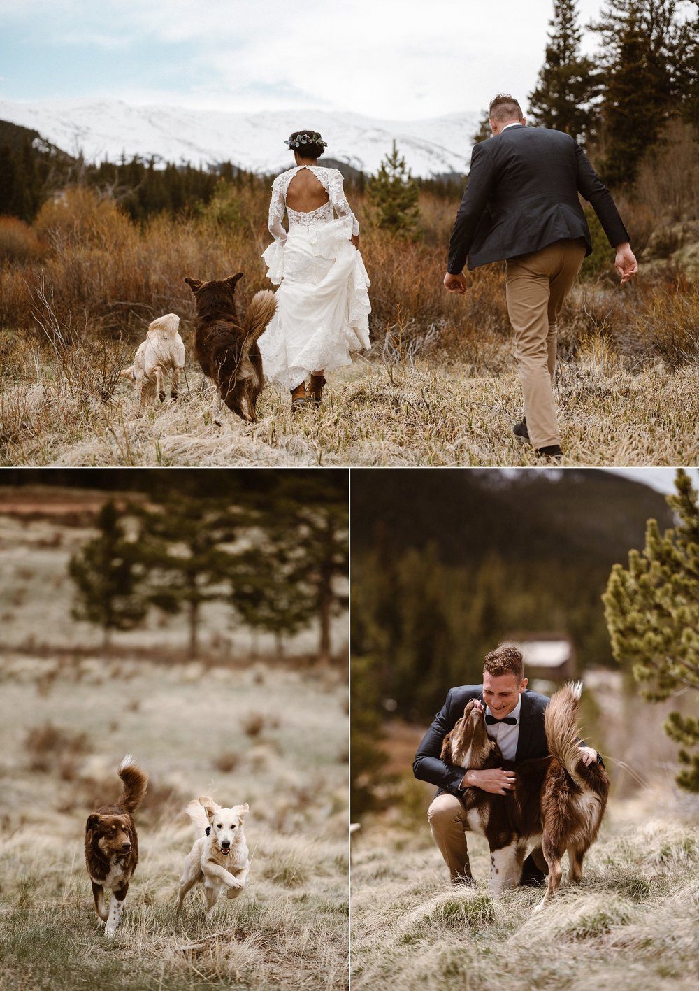 Wandering with their pups into the grassy fields behind their cabin as a perfect adventurous book end to their non-traditional hiking elopement through the mountains near Breckinridge, Colorado. Their intimate wedding photographed by Maddie Mae Photography.