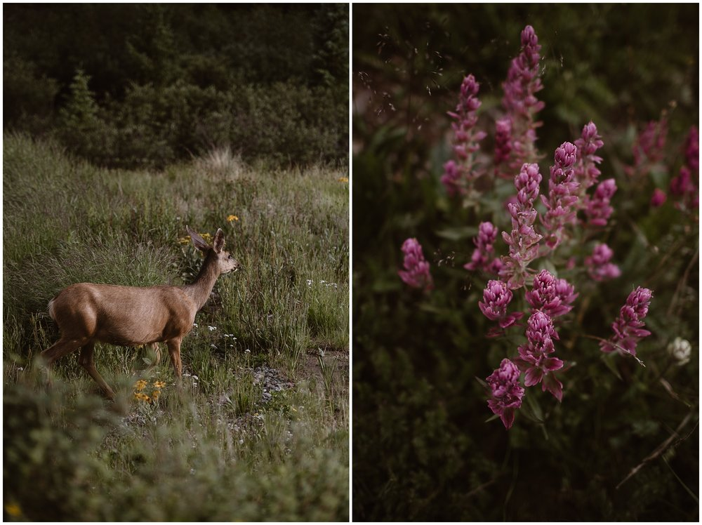 These side-by-side elopement photos showcase the gorgeous wildlife captured during Katie and Logan's adventure elopement (their 4x4 wedding). On the photo to the left, a small deer walks through a meadow and a burst of wildflowers. In the photo to the right, a bright bloom of pink wildflowers is the center of attention.