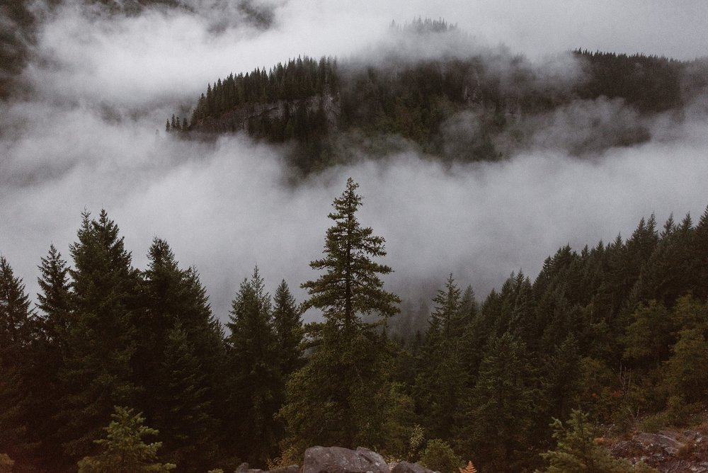 A slow and cold fog rolls into this shot of an Oregon forest. Tall evergreen trees peek up from the bottom of the frame, all covered in an Oregon mist that's made this state famous for destination elopements.
