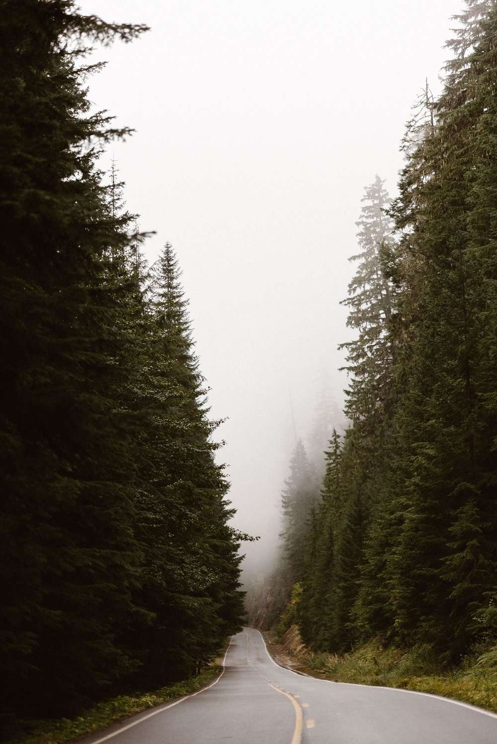 A long road leads into a green, lush forest in Washington state as fog settles in the distance. This photo was captured by Adventure Instead, a Washington elopement photographer.