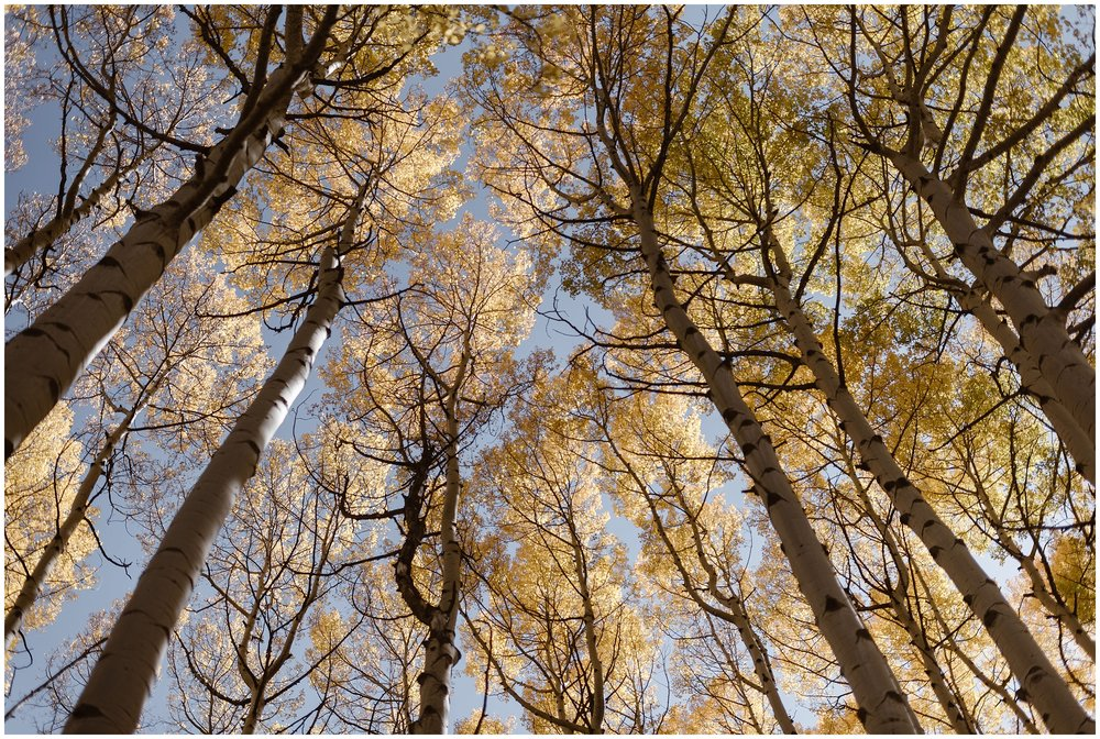 In this image captured by elopement photographer Adventure Instead, the light, golden aspen trees are shown against a pale blue sky. Ouray, Colorado, is well known for its gorgeous Fall colors, making it the best elopement ideas for couples looking to find a beautiful location.