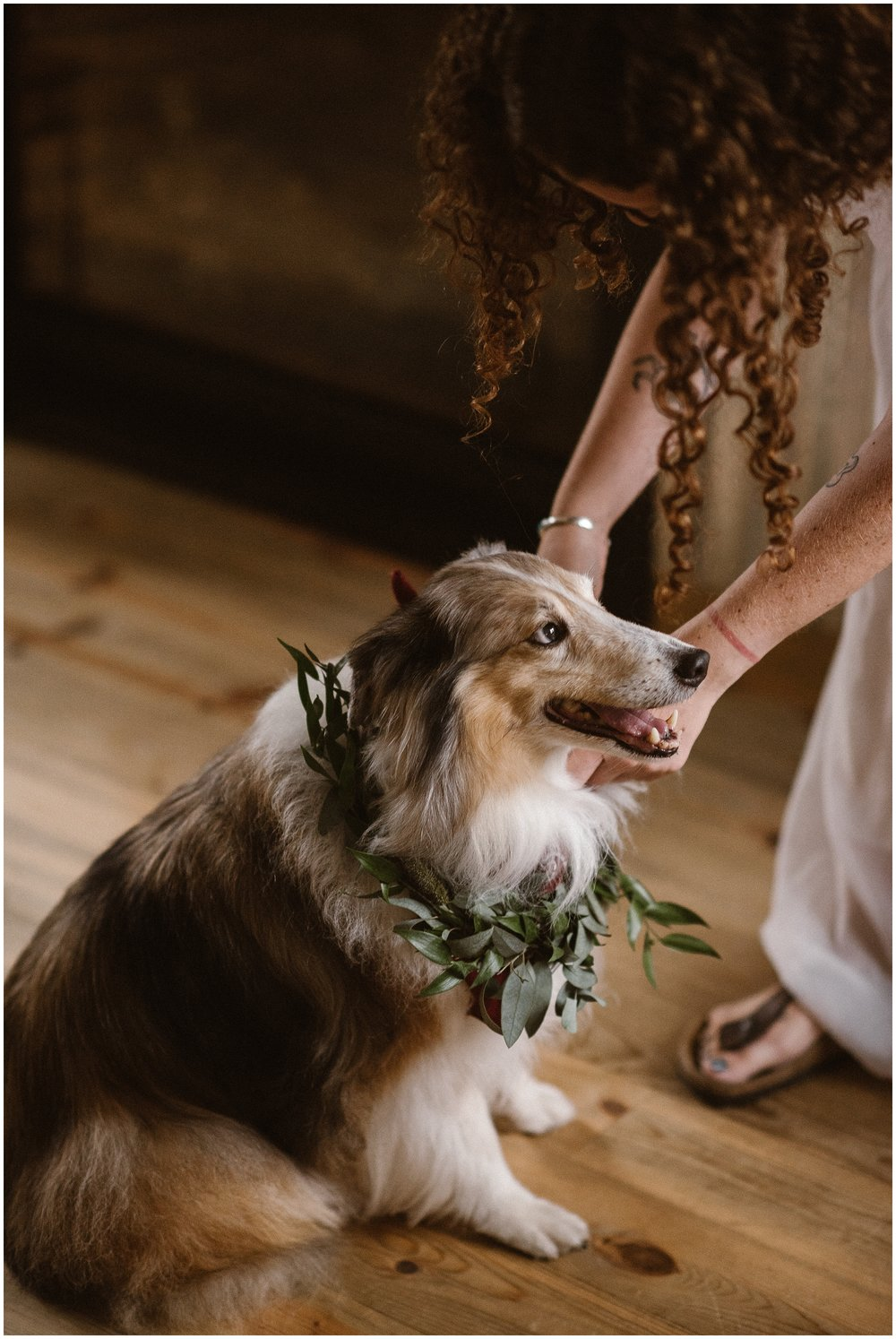 A little collie dog sits on the ground as his owner holds him on his leash. The dog has a green plant and flower collar around his neck, one of the unique eloping ideas his owners included in their small simple dog-friendly wedding,
