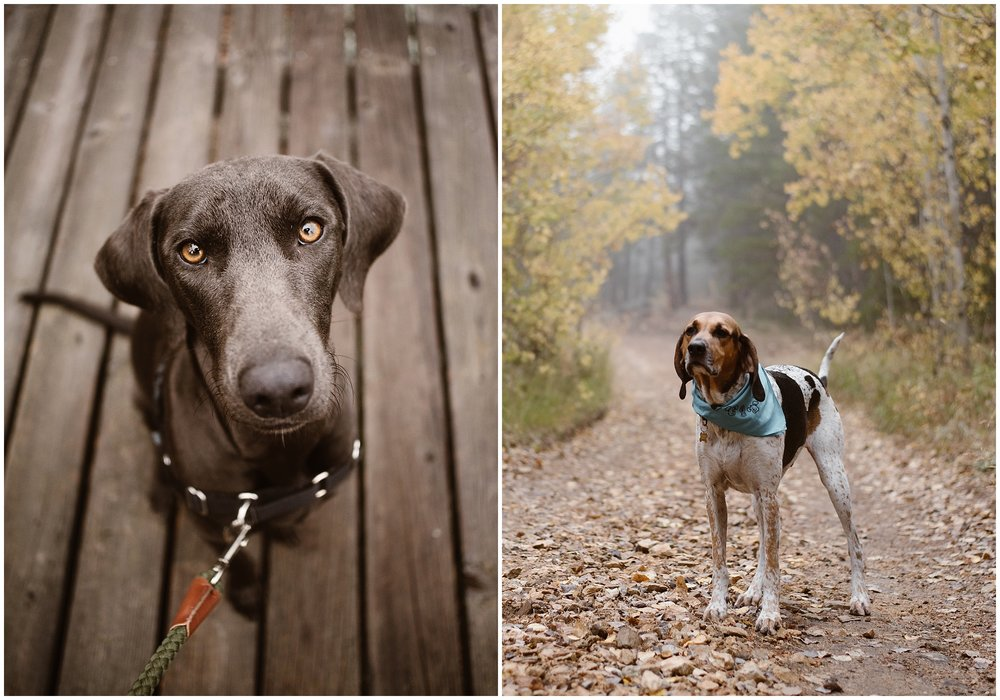 Two of the Adventure Instead dogs, Olive and Cooper, are shown in the image above. These two pooches belong to Amber, an elopement photographer from Adventure Instead.