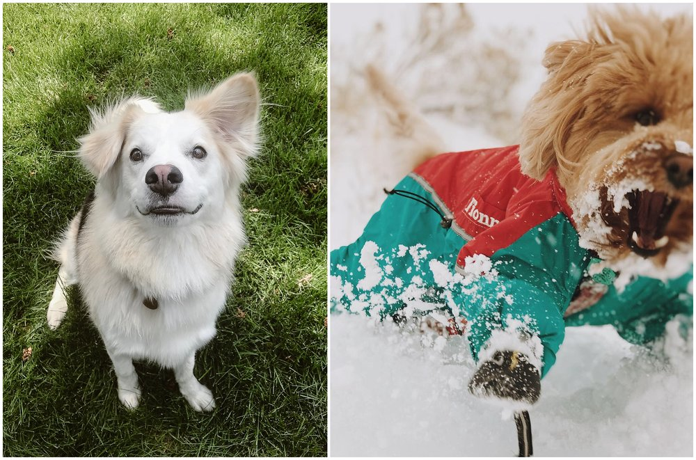 In these side-by-side dog photos, two of the Adventure Instead dogs are shown. On the left, Murphy (Tori's dog) stares up at the camera with a goofy, floppy-eared grin. In the photo on the right, Fionn the Goldendoodle romps arounds in the snow in his custom teal and orange snowsuit.