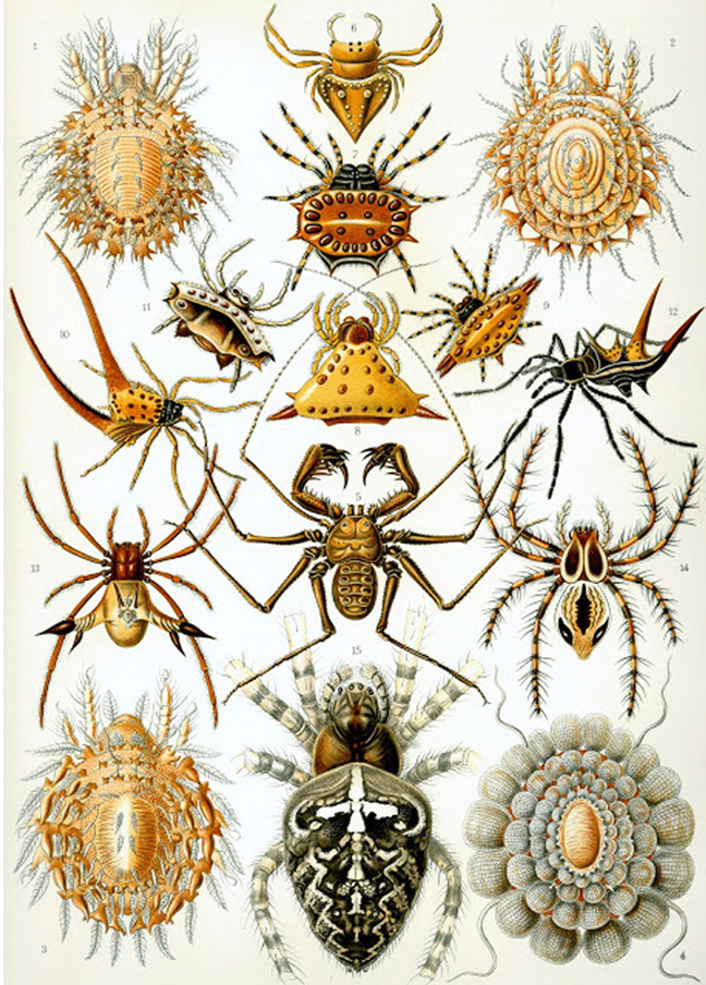 Haeckel_Arachnids.jpg