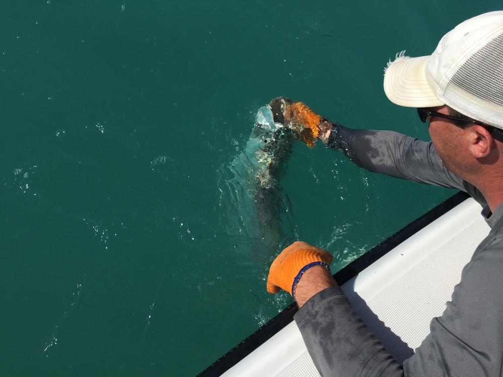 Tarpon Fishing, Florida Keys, Islamorada, Bowed Up Fishing Charters