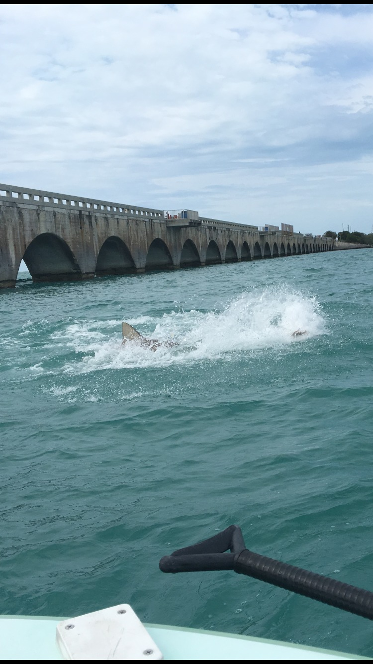 Tarpon, Tony Horsley, World Wide Sportsman