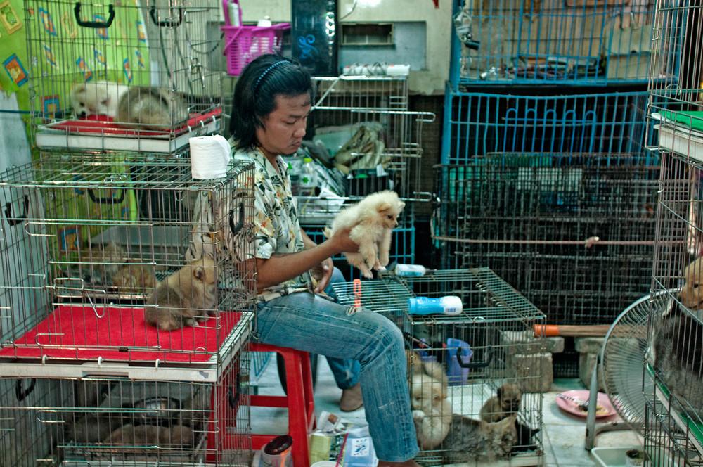 No podía faltar una zona dedicada a las mascotas...desgraciadamente, los animales no esperan dueño en las mejores condiciones