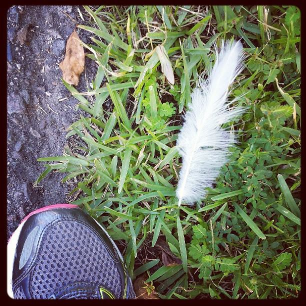 Walking feather