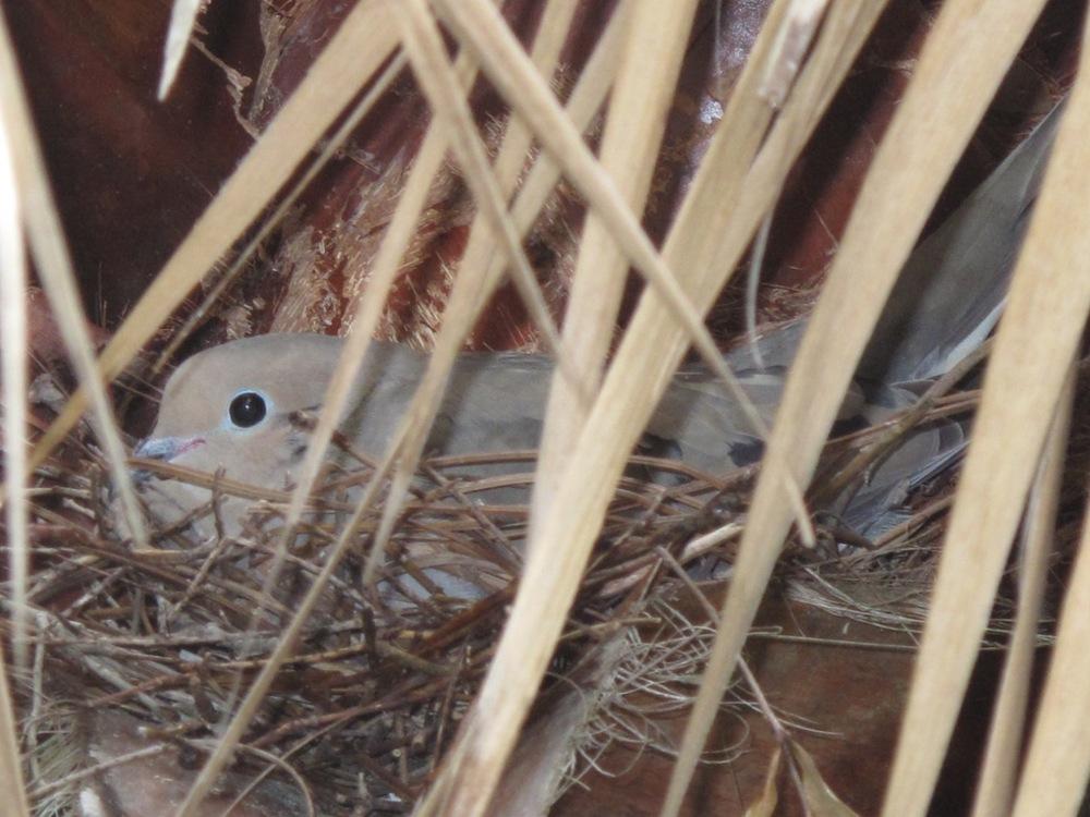 Mama-bird.jpg