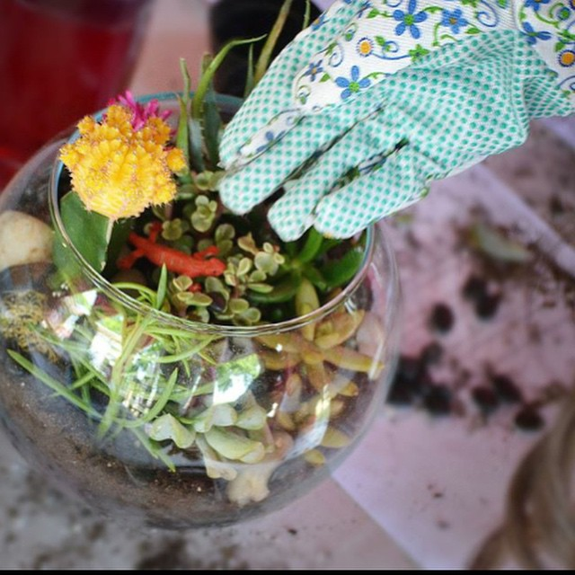 Hanging Terrarium and macrame holder workshop
