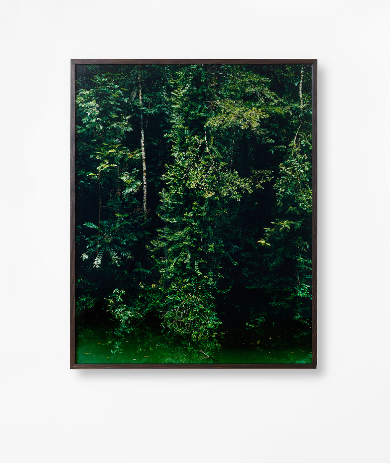 %22North Johnstone River%22 2014 (From the series Deep North) Traditional archival darkroom print.jpg