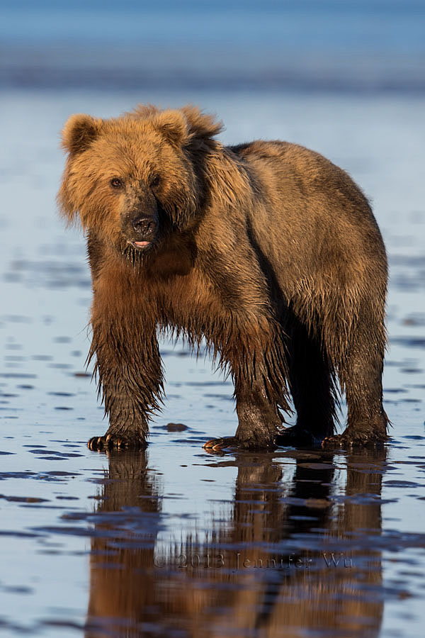 20130721_1_Bears_259