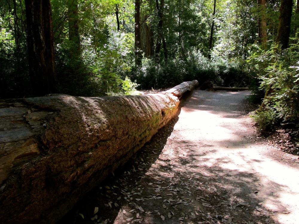 Big Basin Redwoods State Park (CA, USA)