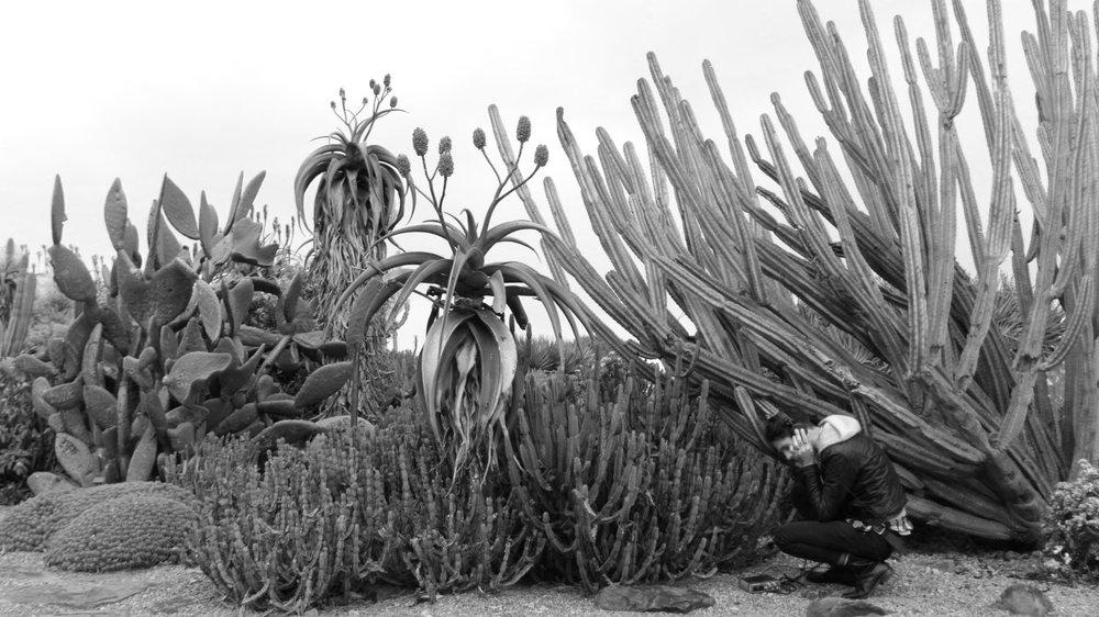 Plant Symphony - Bundanon Trust residency