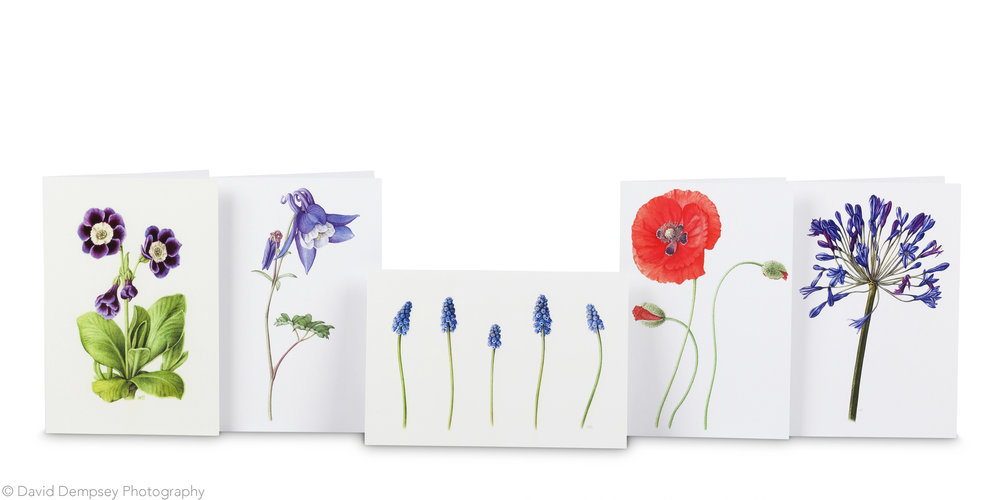 Cards by Holly Somerville