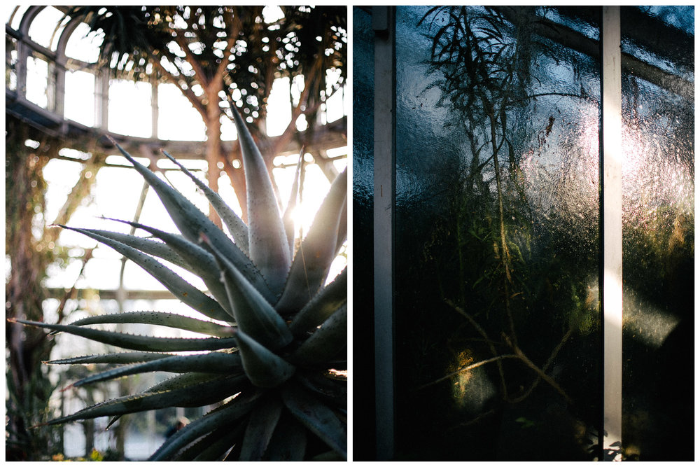 botanischer-garten-berlin-blog-ohhedwig_4