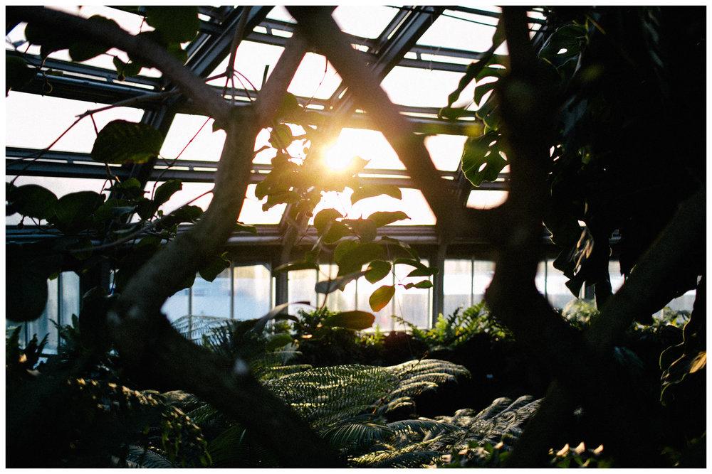botanischer-garten-berlin-blog-ohhedwig_1