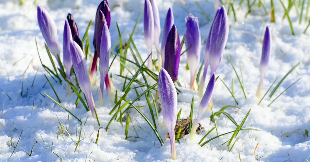 YOGA BADEN |spring.jpg