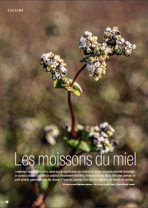 Côté Ouest / Reportage sur le miel de sarrasin, Finistère sud.