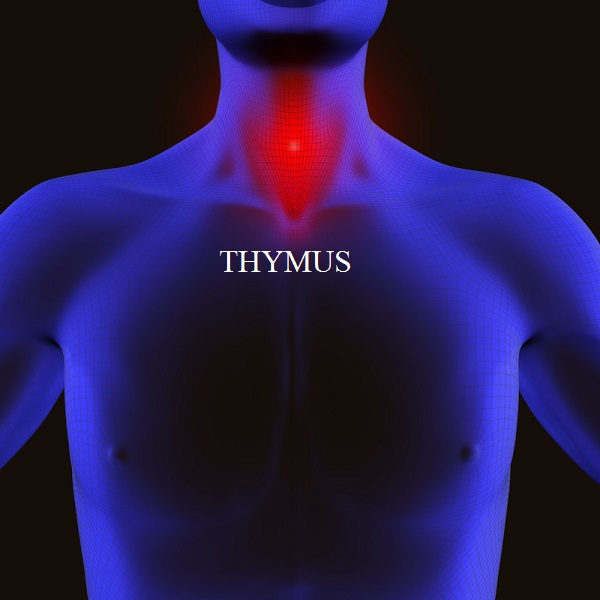 Energetically, the thymus gland is associated with the connection between you and your spiritual identity. This includes your beliefs about the right to be strong and safe. Lymphatic system disorders, immune system problems, thymoma, DiGeorge's syndrome or thymus cancer may signal a need to reconnect with Source, embrace your divinity, and establish an awareness that you are meant to have a joy-filled, healthy and balanced existence, free from illness and debilitating stress.
