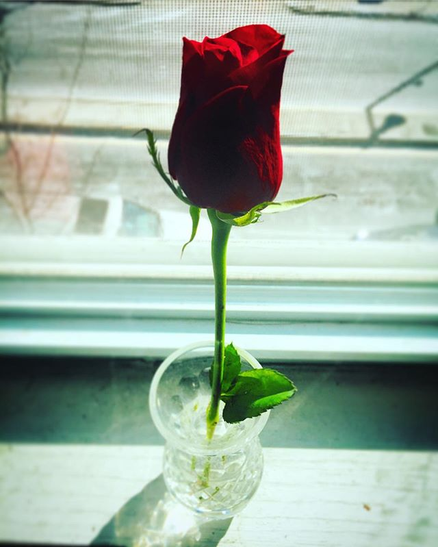 Happy Valentine's Day everyone! #rose #vday