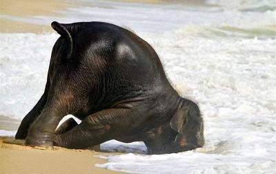 cute-baby-elephant-1.jpg
