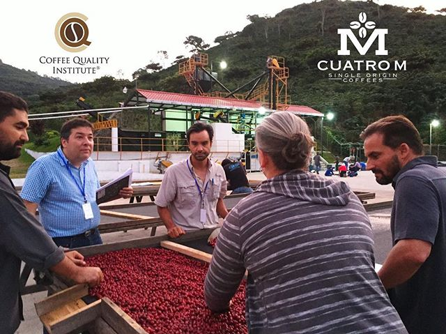 Few spots left for the CQI Q Processing course being held at Finca El Manzano. Check out our Bio and register online for either the Spanish or English courses. #cqi #coffeequalityinstitute #fincaelmanzano