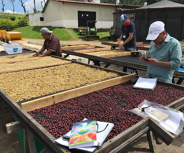 Day 3 at CQI's Q Processing course at Finca El Manzano Fermentation, washing, and drying. #coffeequalityinstitute #fincaelmanzano #cqi #coffeeprocessing
