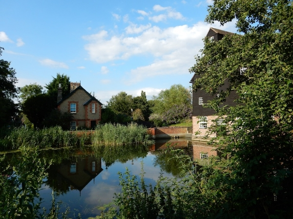 Millpond, Houghton Mill, the Fens, Cambridgeshire, UK (Jul 2014)
