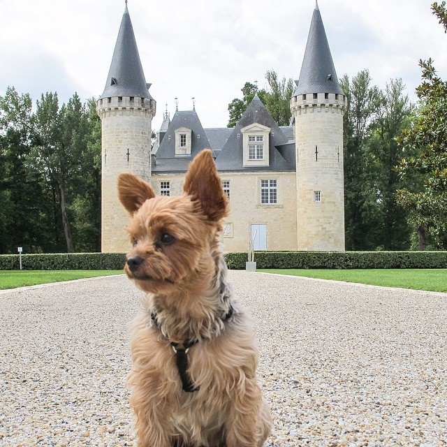 Our little Ruff Traveler discovering the wineries of #Bordeaux this past summer. Chateau d'#Agassac was absolutely stunning! #rufftravelers #wine