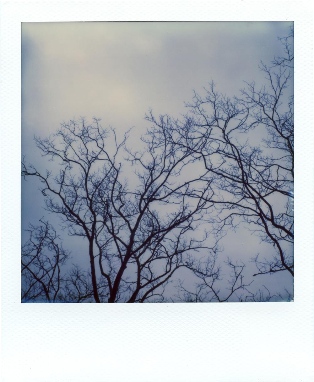 Tree_EMP1.jpg