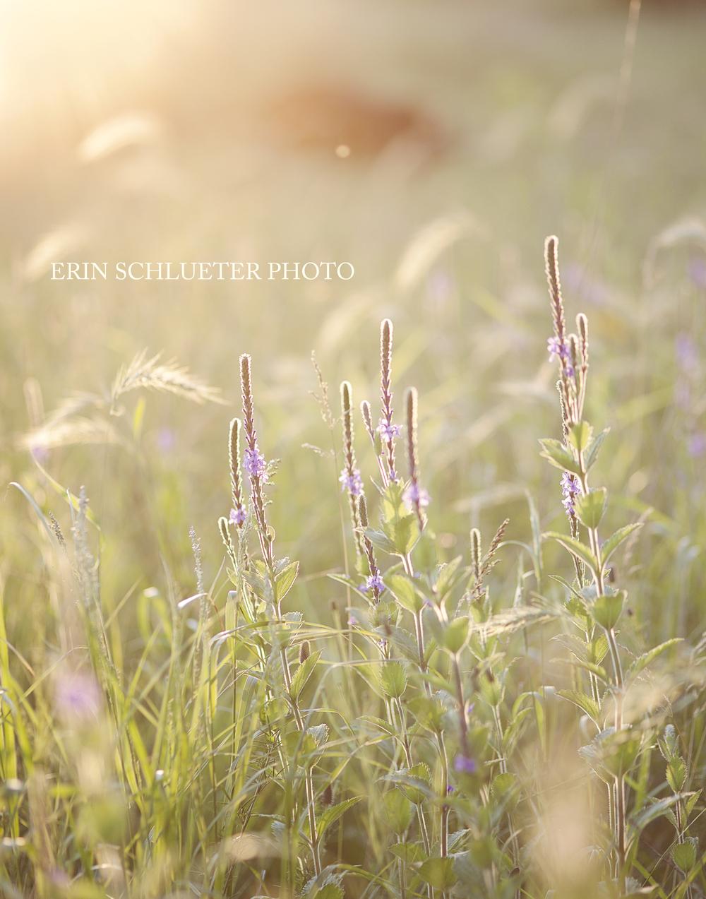 Prairie Wildflowers in the summer
