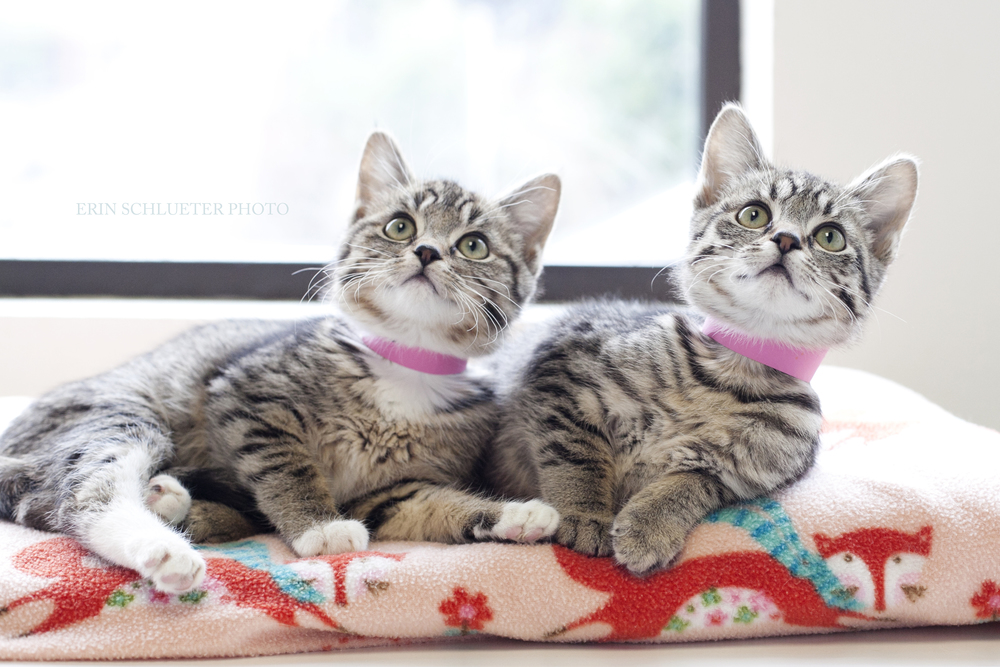 A little Valentine's Day kitten love from PAWS Cat City