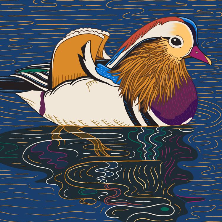 The famous Central Park  mandarin duck .
