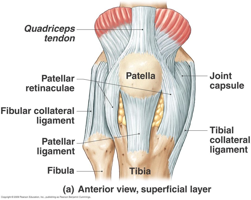 Acl Series Anatomy Lets Get Oriented Shall We Vesta