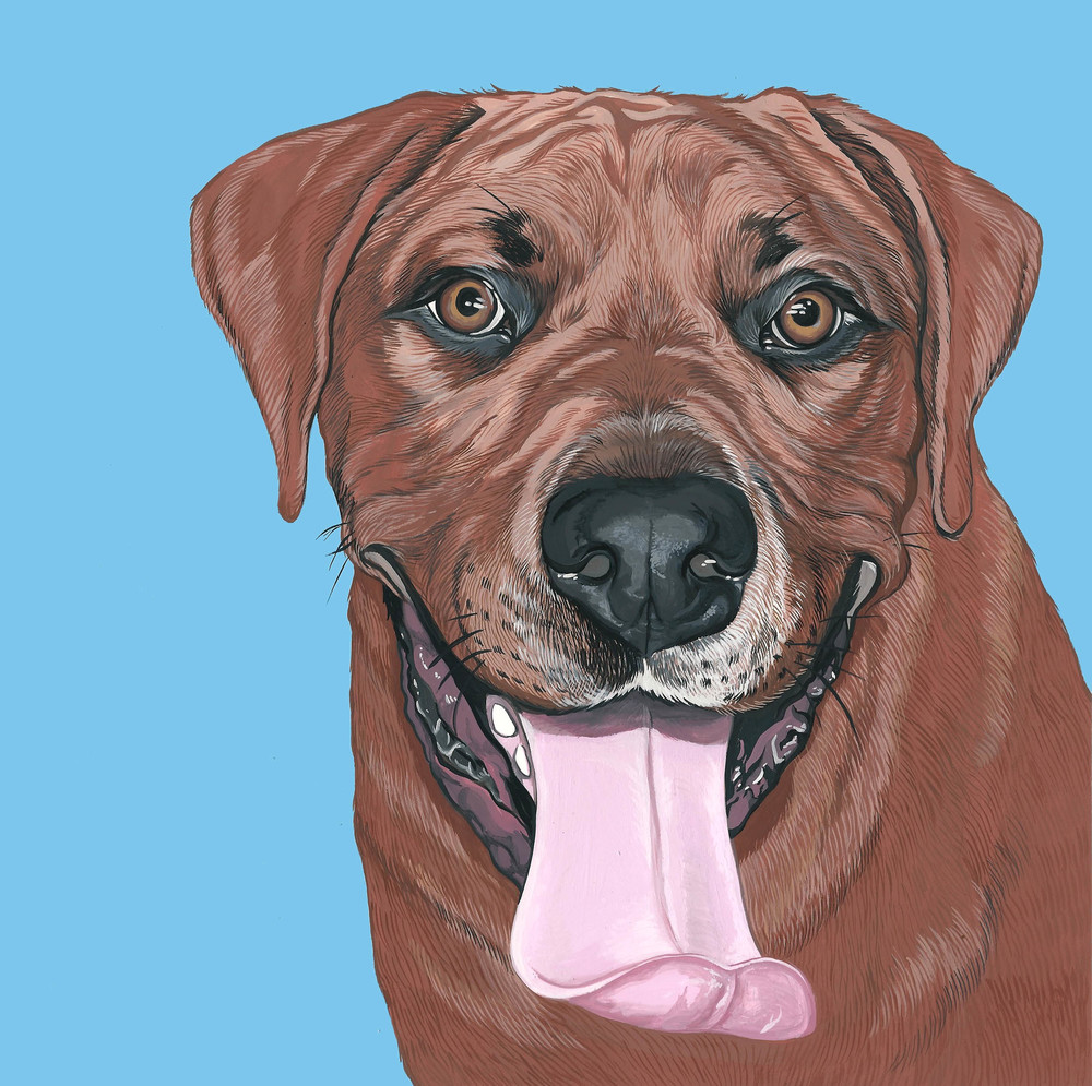 dog-portrait-rhodesian-ridgeback-1.jpg