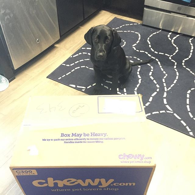 The best part of @chewy delivery day isn't the food, toys, or treats. It's the packing paper. Duh.  #blacklabpuppy #labsofinstagram #blacklab #blacklabsquad #bigpuppy #papershredder #itsnotthesizeoftheboxthatcounts #itstheamountofpaperinside