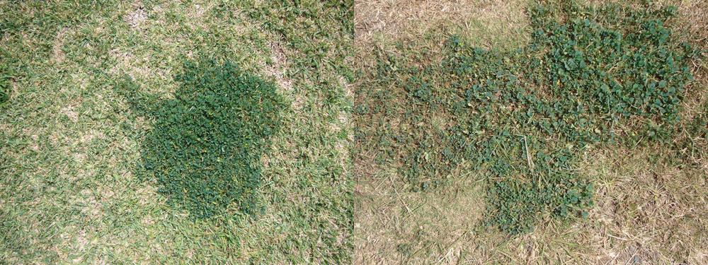 kim-beck-greener-01.jpg