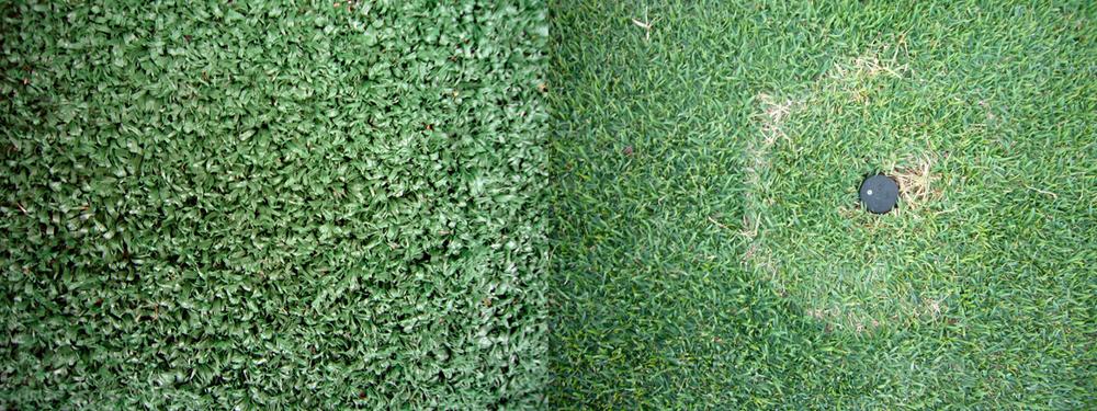kim-beck-greener-07.jpg