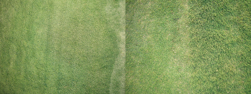 kim-beck-greener-10.jpg