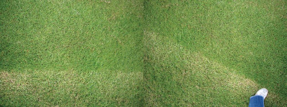 kim-beck-greener-14.jpg