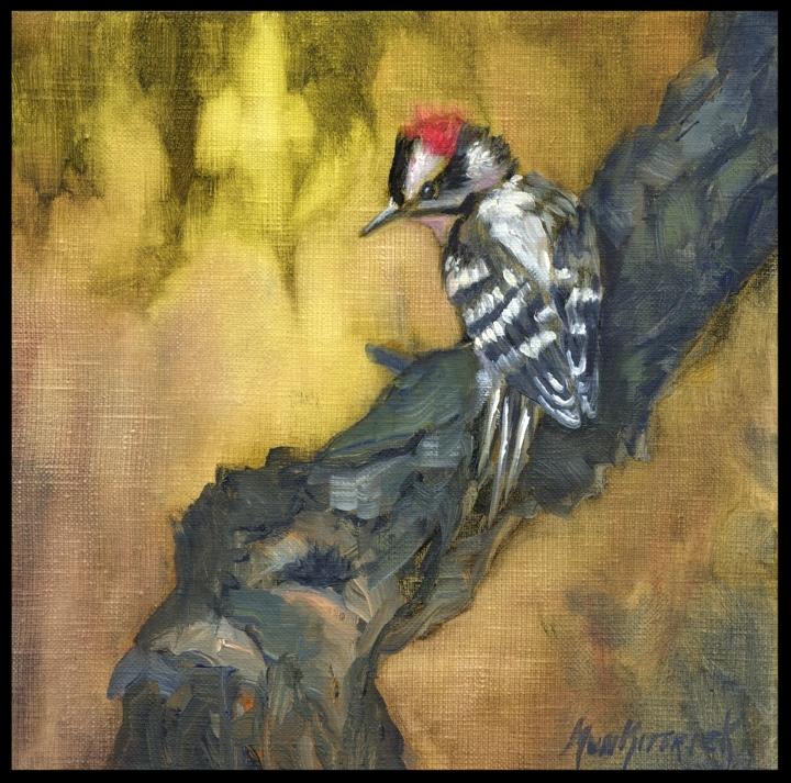 Downey Woodpecker   8 x 8    Oil on Linen    $250
